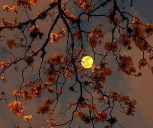moon, flowers, and nature image