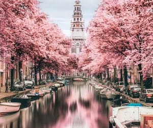 amsterdam, pink, and city image