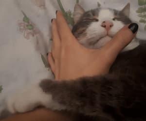 affection, animal, and gif image