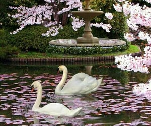 Swan, flowers, and pink image