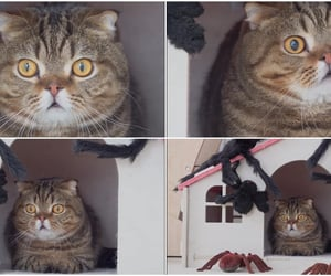 lulu, spiders, and shooketh image
