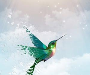 colibri, libertad, and life image