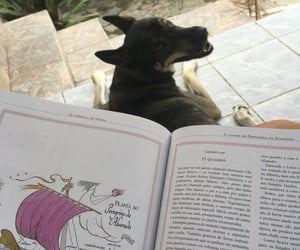 books, dog, and as cronicas de narnia image