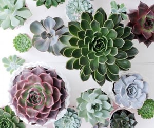 plants, green, and succulents image