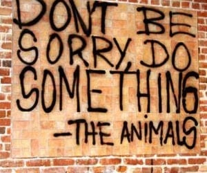 animal, quotes, and vegan image