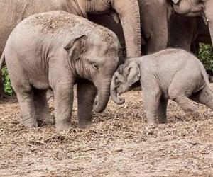 africa, animals, and animal image