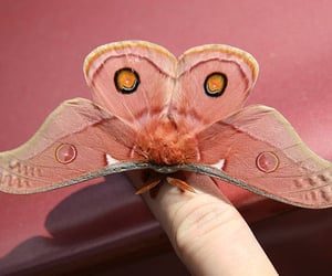 pink, butterfly, and aesthetic image