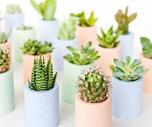 pastel, plants, and cactus image