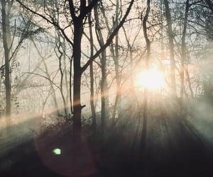 nature, smoke, and woods image