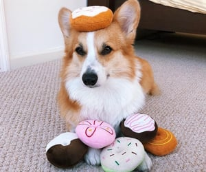 dog, fluffy, and paws image