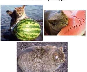 animals, memes, and cats image