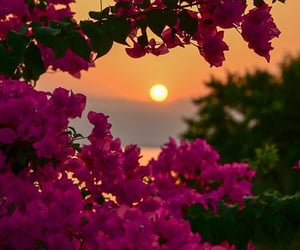 flowers, sunset, and view image