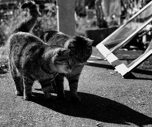 b&w, cute, and cats image