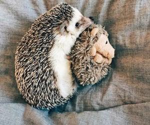 animals, cuddle, and happy image