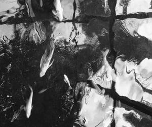 movimento, peixes, and preto e branco image