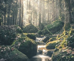 creek, forest, and nature image