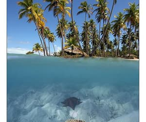 Island, tropical, and ocean image