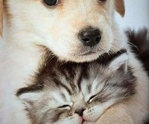 animals, dog, and good night image