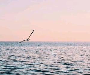 bird, blue, and libertad image