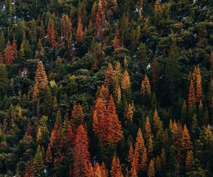 autumn, california, and forest image
