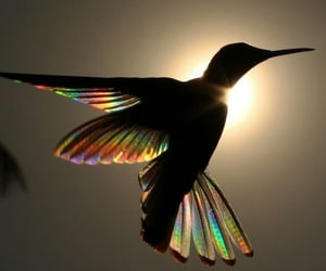 nature, colors, and hummingbird image