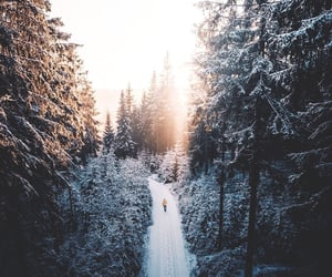 forest, nature, and snow image