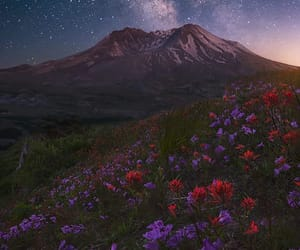floral, photography, and night image
