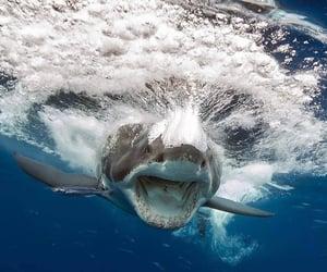 mar, naturaleza, and tiburon image