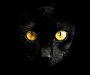 black, cat, and contrast image