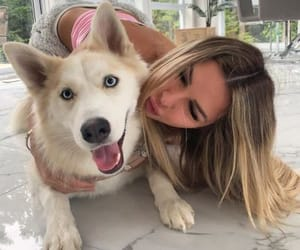 amazing, animal, and dog image