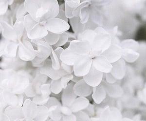 aesthetic, white, and background image