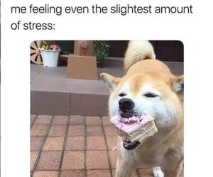funny, dog, and food image