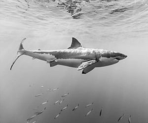 black and white, fish, and ocean image
