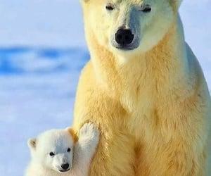 Animales, naturaleza, and oso polar image