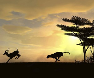 africa, speed, and animals image