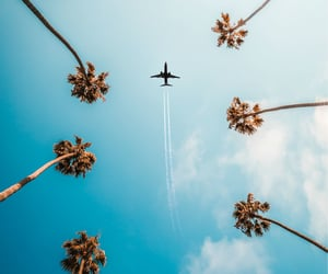 plane, summer, and travel image