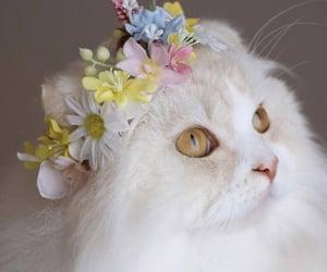 cat and gatito image