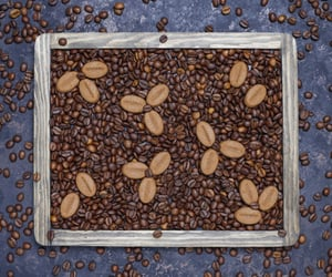 coffee beans online and buy fresh coffee beans image
