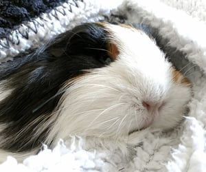 adorable, pet, and animal image