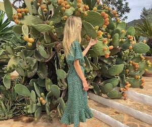 cactus, clothes, and dress image
