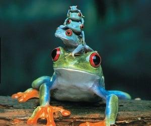 frog, animal, and nature image