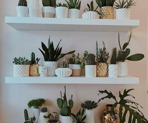 decoration, home, and plants image