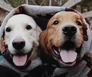 animals, wallpapers, and dogs image