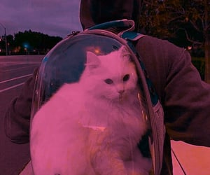 cat, aesthetic, and backpack image