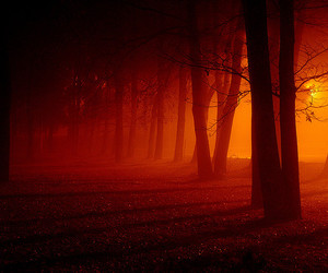 forest, trees, and red image