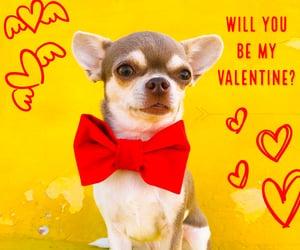 Dog Collar, valentines, and red velvet image