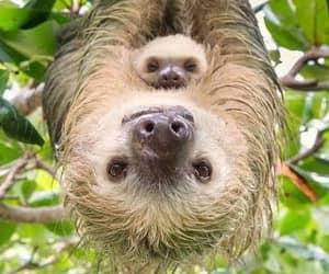 sloth and animals image