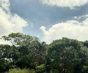 green, plants, and sao paulo image