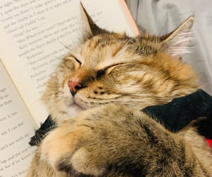 books, gato, and cute image