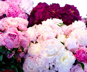 :) and peonies image